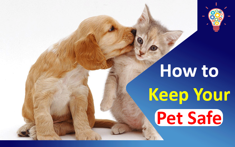 How to Keep Your Pet Safe