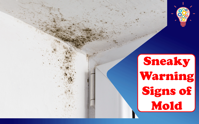 Sneaky Warning Signs of Mold